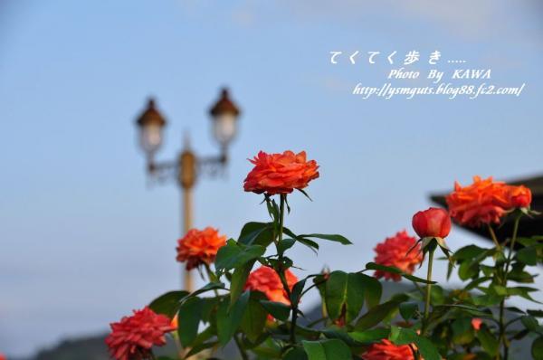 2バラ公園_9969