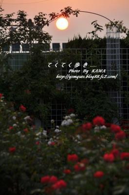 5バラ公園_0001