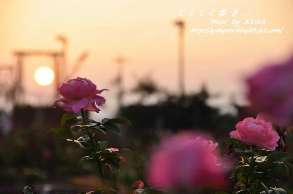 6バラ公園_9994