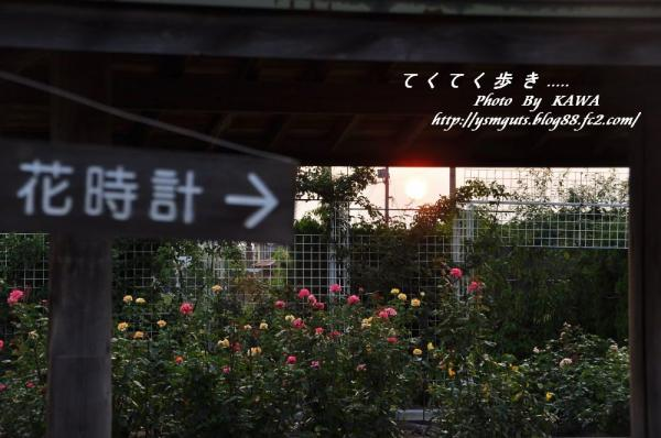7バラ公園_9997