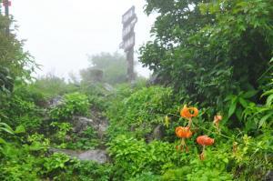 11コオニユリ天狗09.08.16