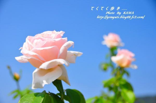 3バラ園_0971