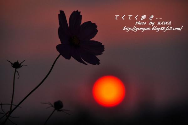 3見奈良_1479