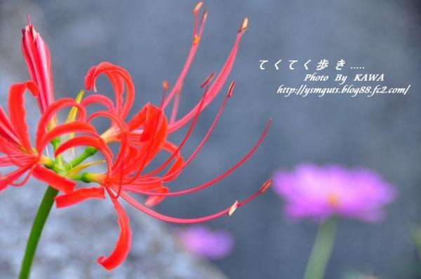 5見奈良_1478