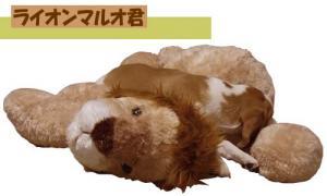 ライオンマルオ