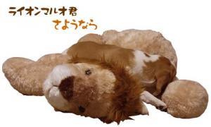 ライオンマルオさようなら