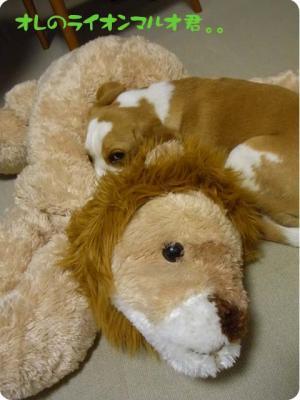 オレのライオンマルオ君