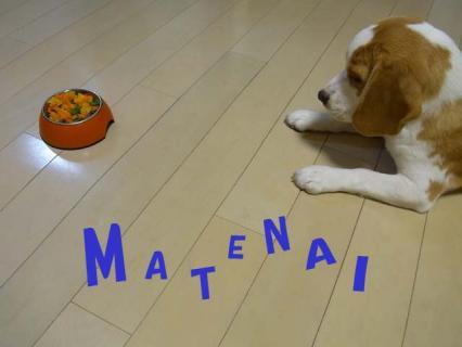 MATENAI.jpg