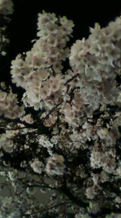 仙川駅前の夜桜
