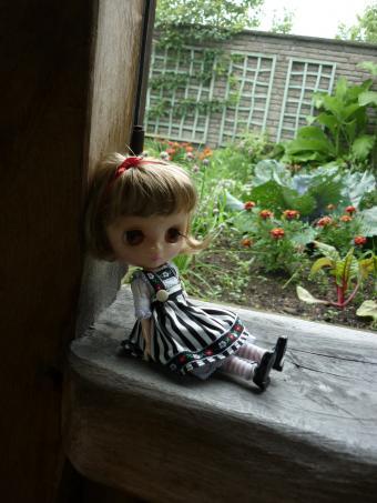 窓辺のりりーちゃん。