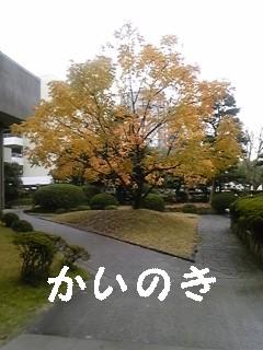 091203_131033_ed.jpg