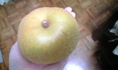 大垣の梨幸水 梨