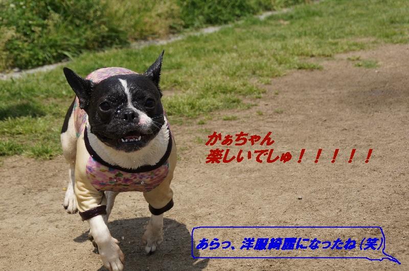 10_20110512180138.jpg