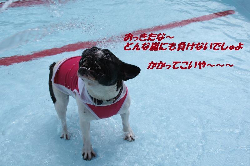 10_20110629132313.jpg