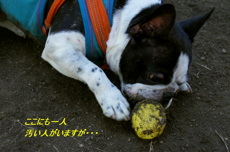 10_20110712203118.jpg