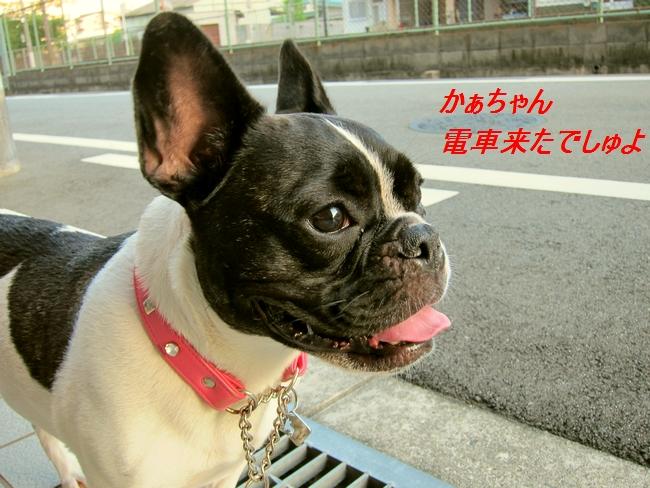 10_20110829113809.jpg