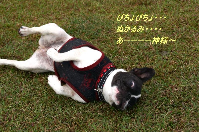 10_20111027074633.jpg