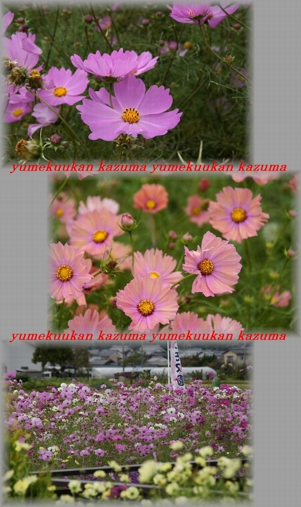 11_20111024114636.jpg