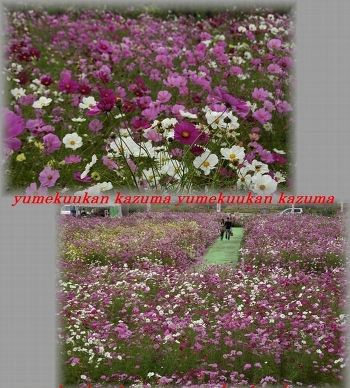 12_20111024115041.jpg
