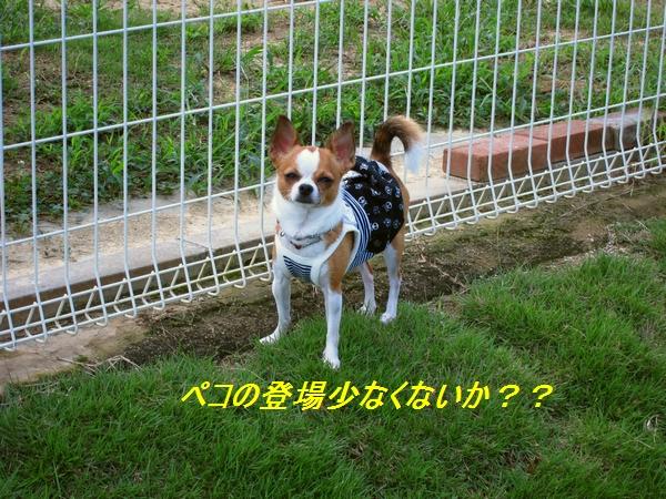 14_20110907141818.jpg