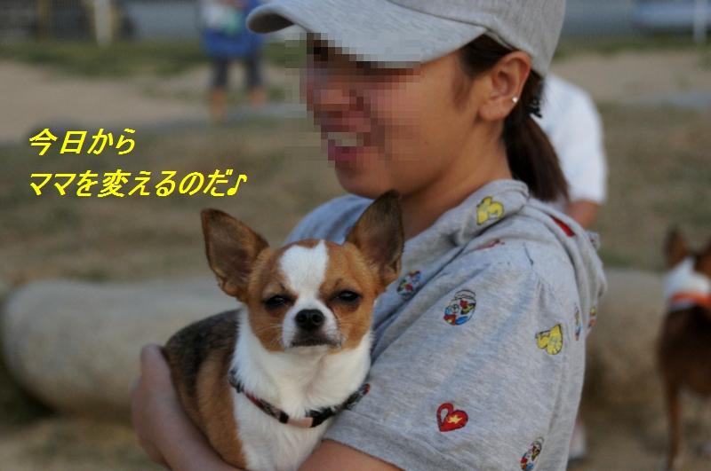 15_20110816162605.jpg