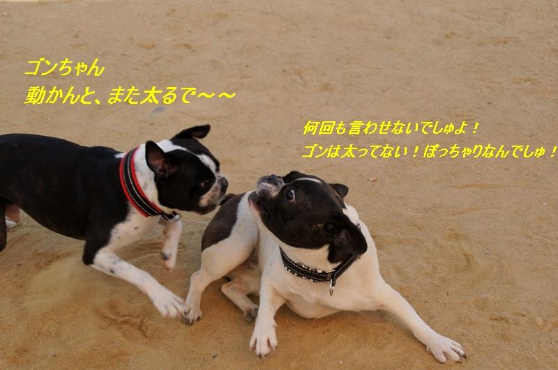 16_20111002223055.jpg