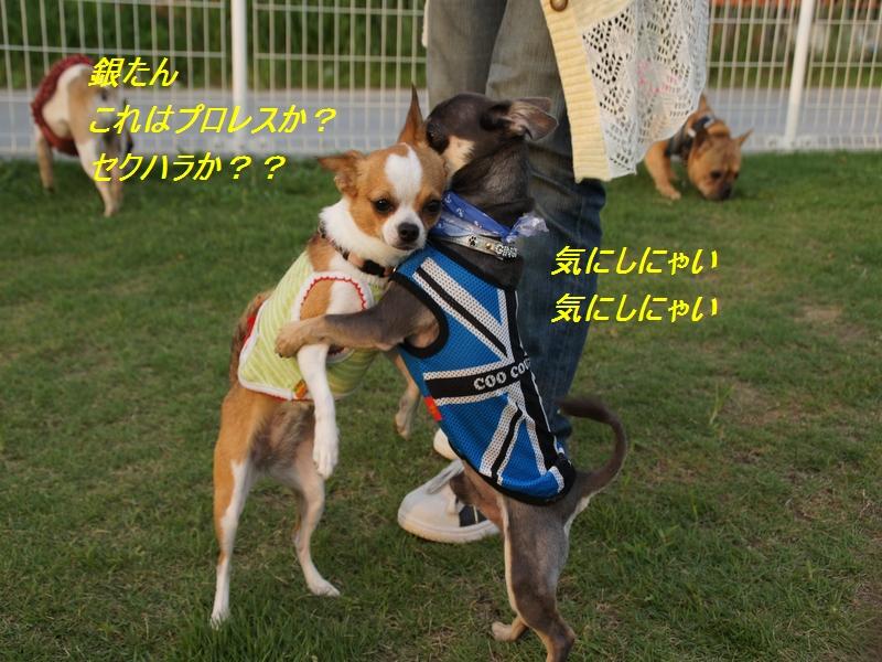 20_20110727205829.jpg