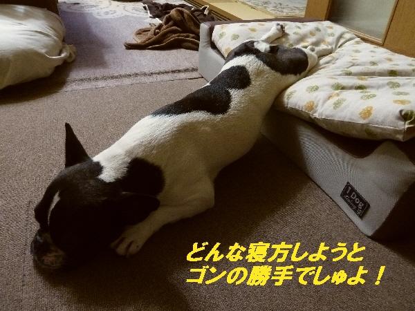 22_20110609192737.jpg