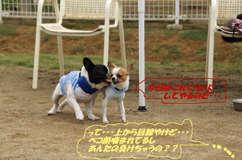 23_20110615134501.jpg