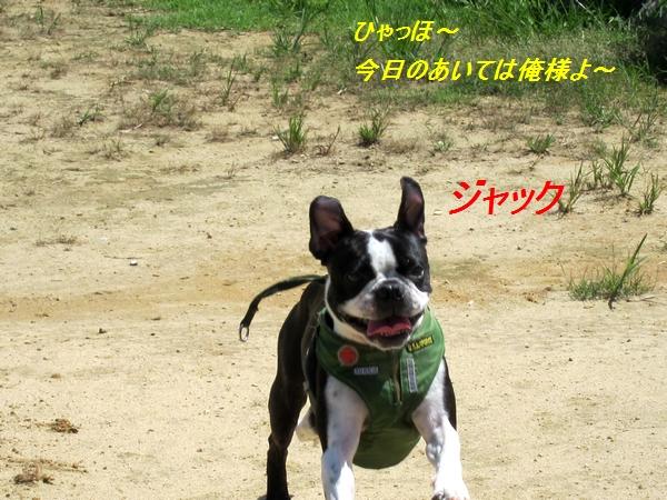 3_20110907135917.jpg