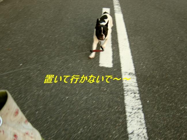 4_20110829112540.jpg