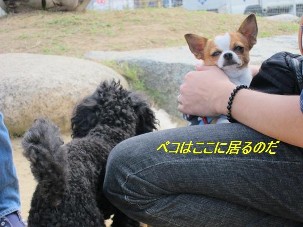 4_20111004194826.jpg