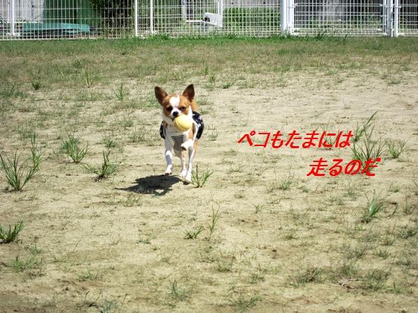 6_20110907140336.jpg