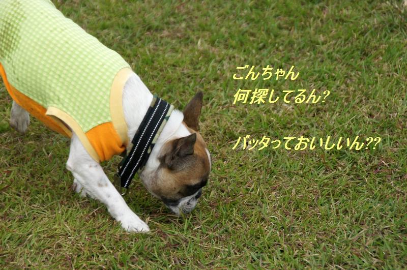 8_20111027074541.jpg