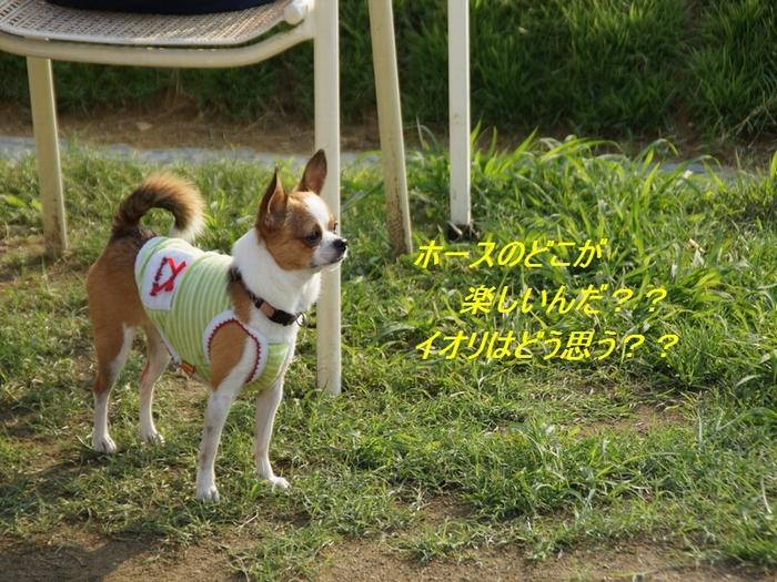 9_20110727204133.jpg