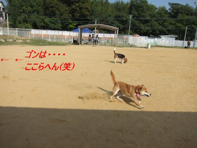 9_20111011224834.jpg