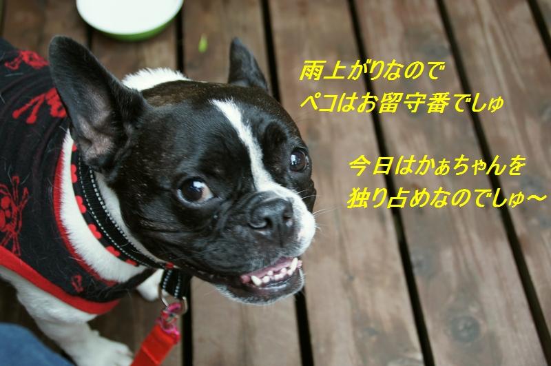 9_20111024114359.jpg