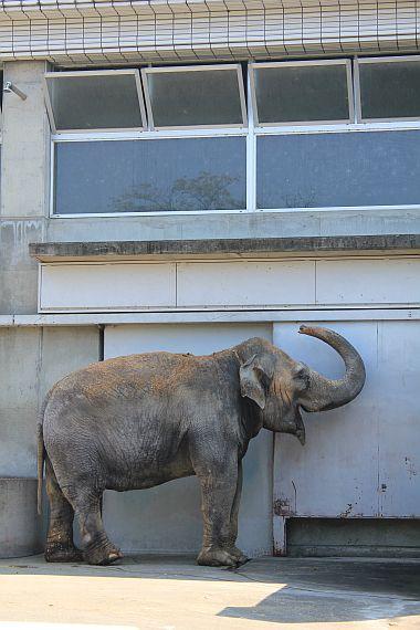 象だぞう~。
