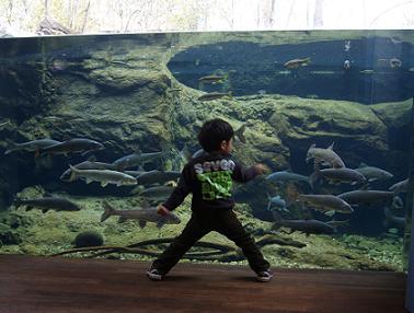 水遊園 淡水魚
