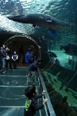 DSC02283 水遊園 アマゾン