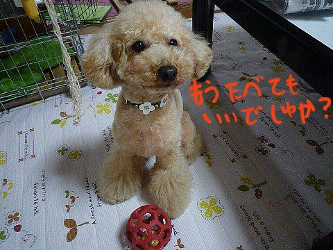 004-1_20100531085830.jpg