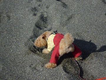 yuzu砂浜