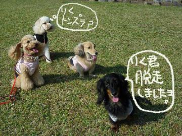 yuzuの友達