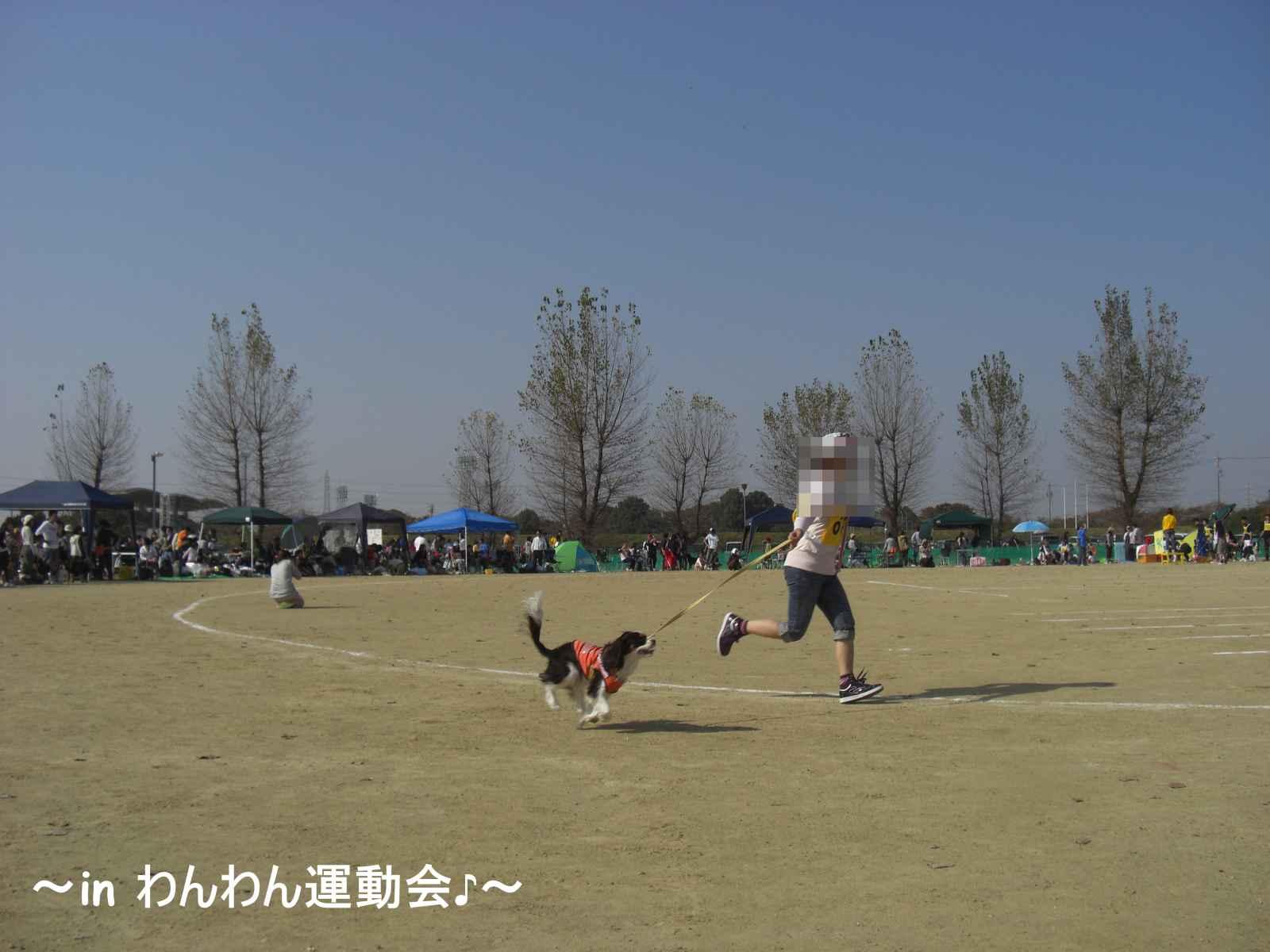 09わんわん運動会3