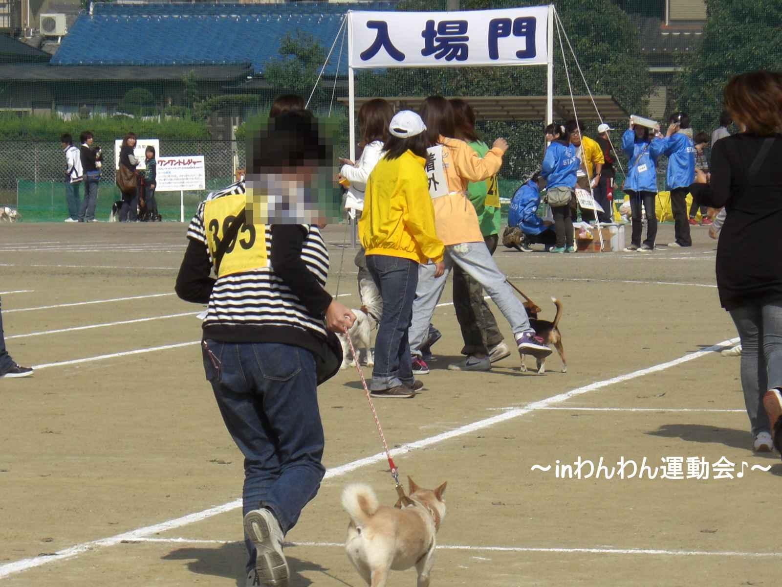 09わんわん運動会4