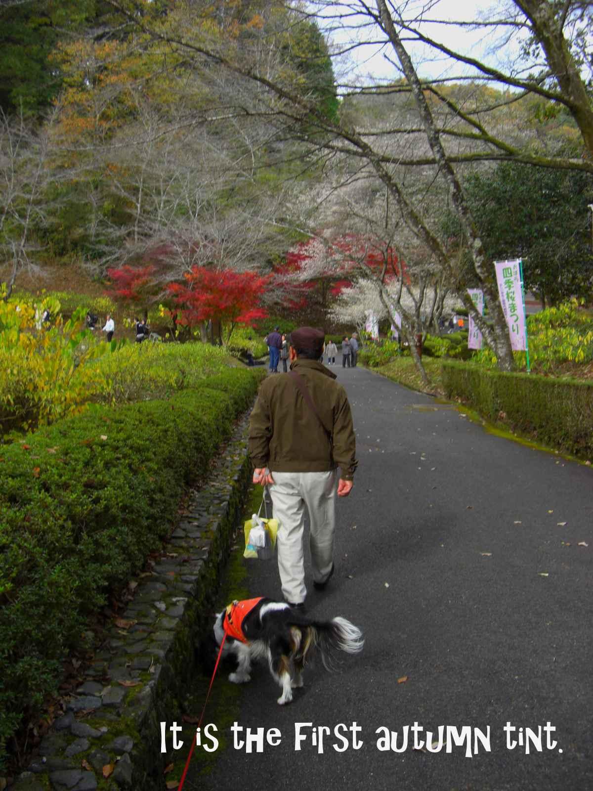 四季桜を見学8