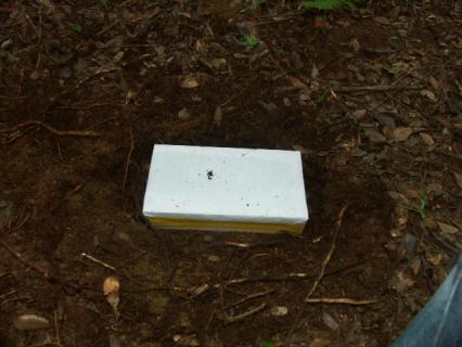 杉の箱を裏山に埋めた
