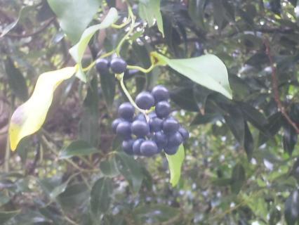 山の秋-エビヅル