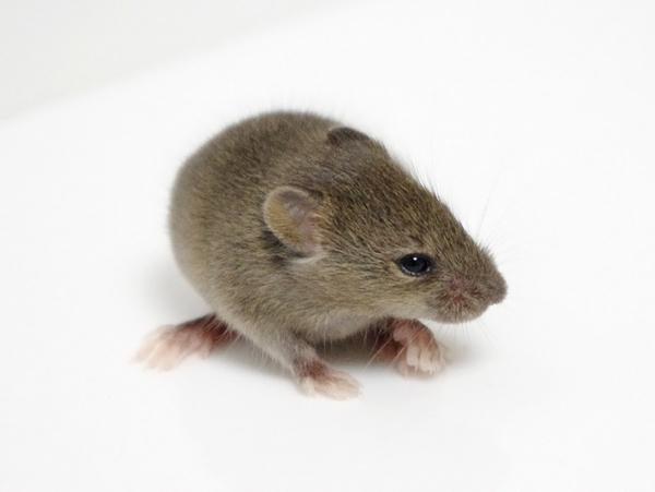 110727ファンシーマウス2