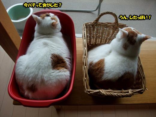 にゃんだろ~光線大好き猫